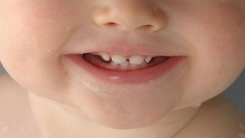 وظایف اختصاصی دندان های شیری