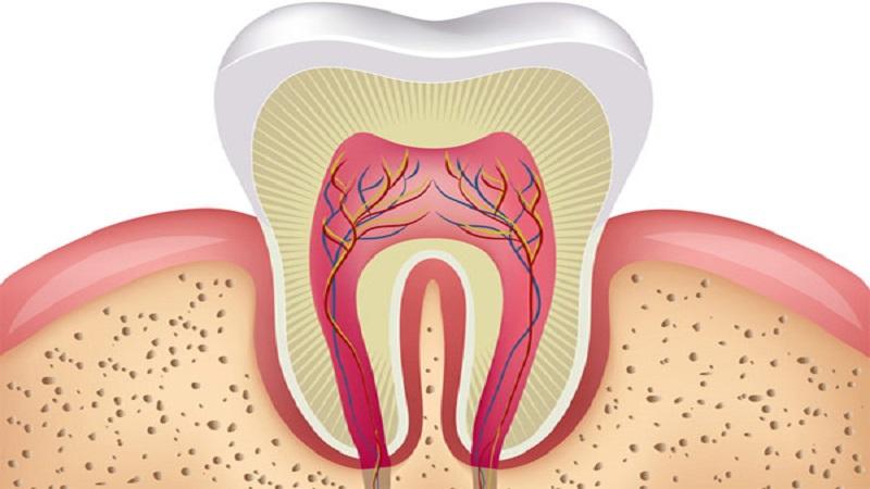 دندانپزشک کودکان اصفهان | پالپ دندان در چه قسمت هایی تشکیل می شود ؟