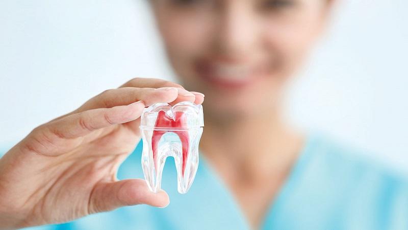 دندانپزشک کودکان اصفهان   دندان ها چه تعداد ریشه و کانال دارد ؟