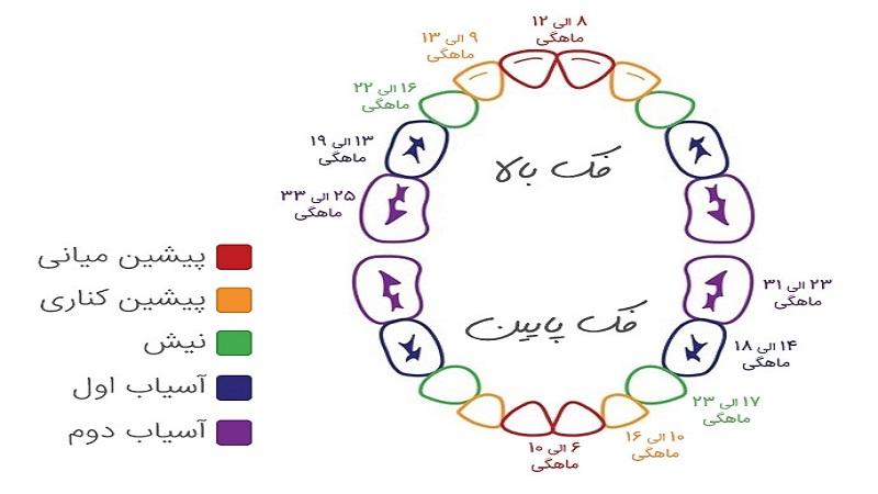 زمان رویش دندانهای شیری | دندانپزشک کودکان اصفهان